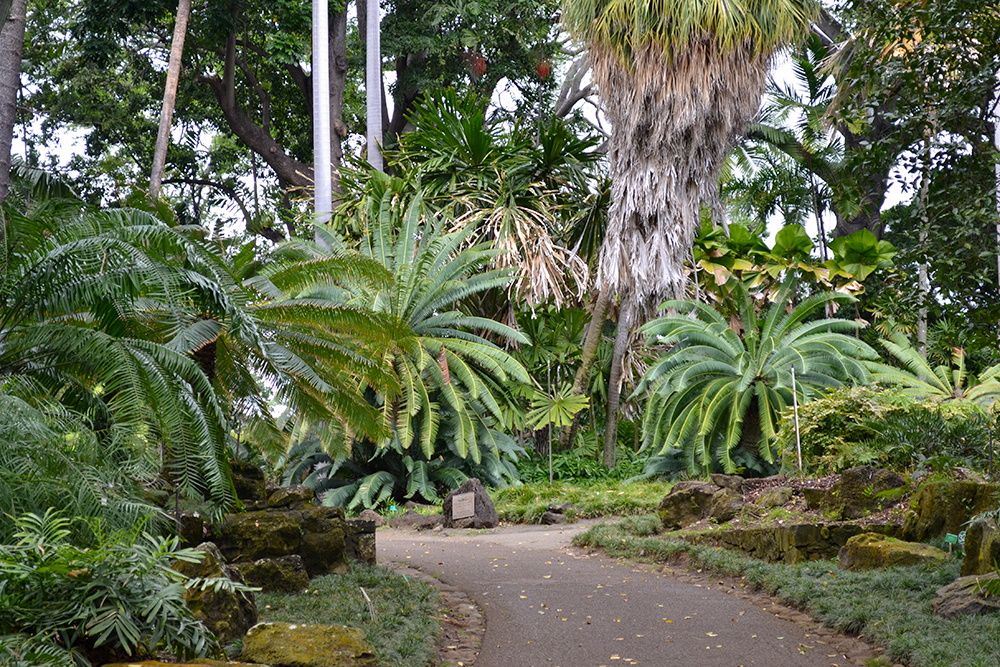 Foster botanical gardens a tranquil oasis in the middle of the city hawaii home for Foster botanical garden honolulu